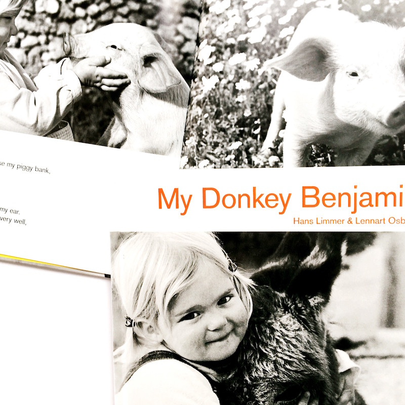 benjamin the donkey Everything you ever wanted to know about benjamin (a donkey) in animal farm, written by masters of this stuff just for you.